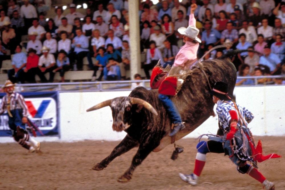 San Antonio Stock Show And Rodeo 2020.2016 San Antonio Stock Show Rodeo